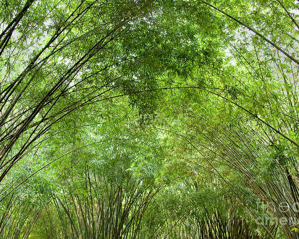 Nature Poster featuring the photograph Bamboo Trees In Wangjianglou Park In Chengdu China by Julia Hiebaum