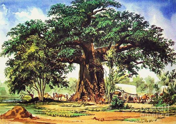 Pd Poster featuring the painting Baobab Tree - South Africa by Pg Reproductions