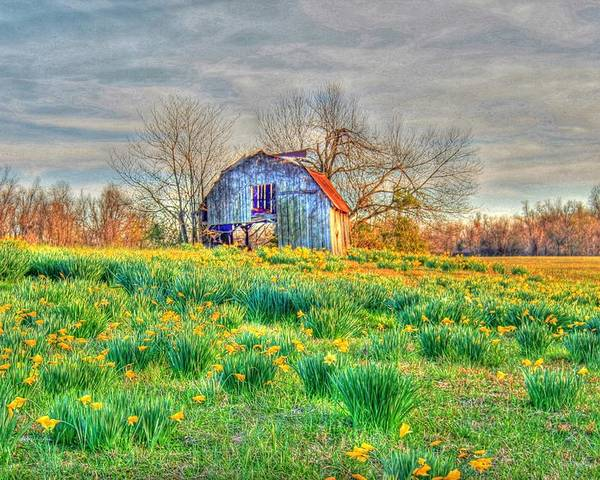Barn Poster featuring the photograph Barn In Field Of Flowers by Geary Barr