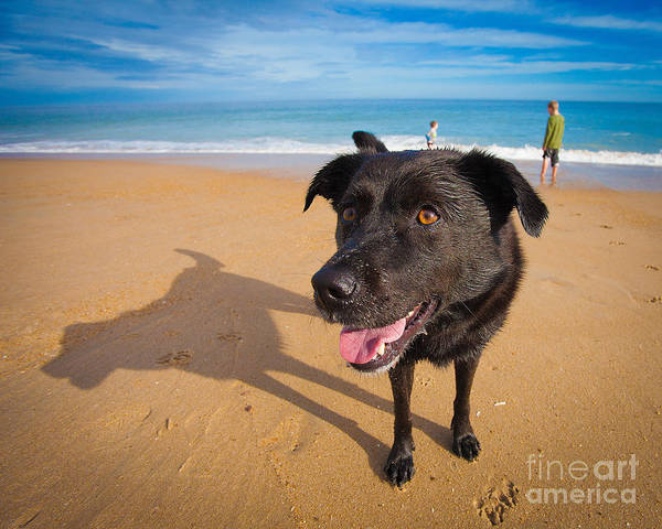 Dog Poster featuring the photograph Beach Dog by Michael Clubb