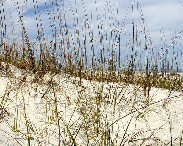 Beach Poster featuring the photograph Beach Dunes by David Lee Thompson