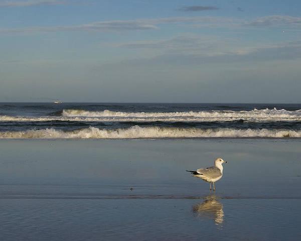 Sea Ocean Gull Bird Beach Reflection Water Wave Sky Poster featuring the photograph Beach Patrol by Andrei Shliakhau