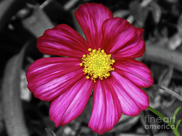 Flower Poster featuring the photograph Beautiful Fuchsia Flower by Mariola Bitner