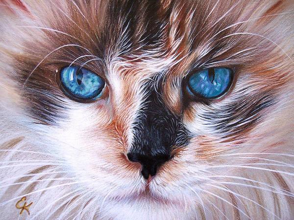Cat Poster featuring the drawing Beautiful Mia by Elena Kolotusha