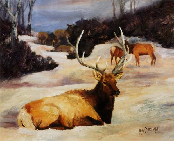 Bull Poster featuring the painting Bedded Down  Bull Elk In Snow by Kim Corpany