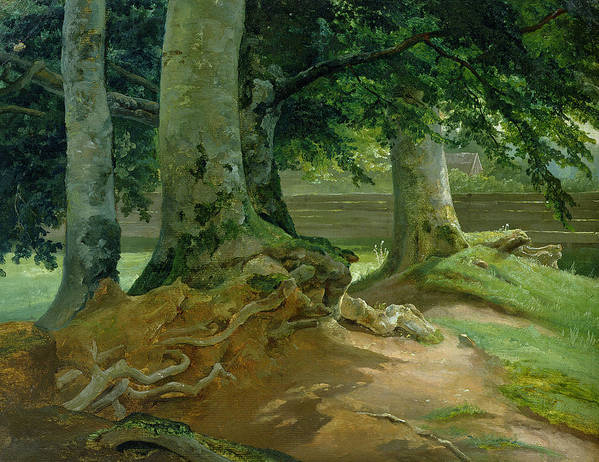 Beech Poster featuring the painting Beech Trees In Frederiksdal Near Copenhagen by Christian Ernst Bernhard Morgenstern