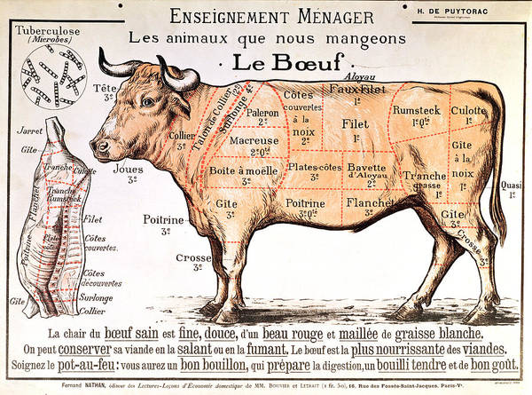 Le Boeuf; Cow; Cut; Joint; Food; Animal; Butchering Poster featuring the drawing Beef by French School