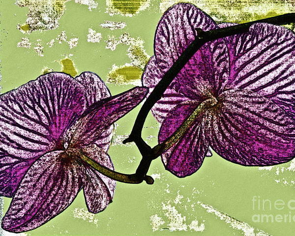 Orchid Poster featuring the photograph Behind The Orchids by Gwyn Newcombe
