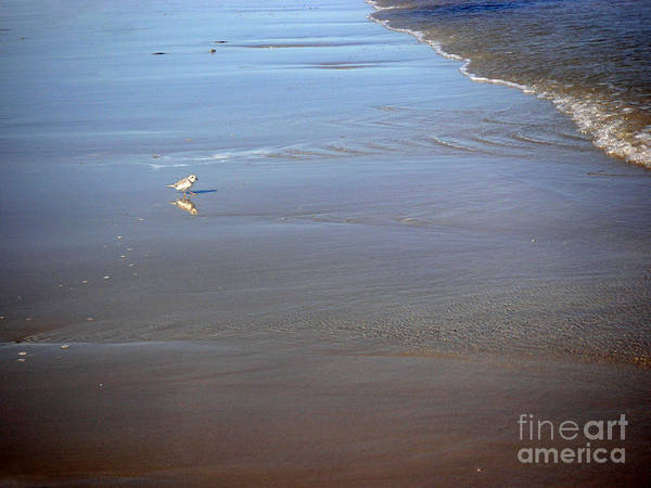 Nature Poster featuring the photograph Being One With The Gulf - Cautious by Lucyna A M Green