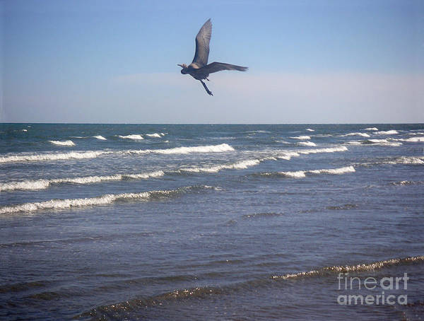 Nature Poster featuring the photograph Being One With The Gulf - On Wings by Lucyna A M Green