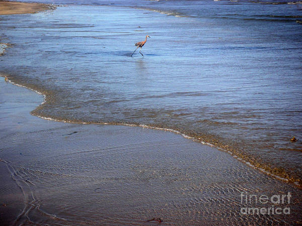 Nature Poster featuring the photograph Being One With The Gulf - Playing by Lucyna A M Green