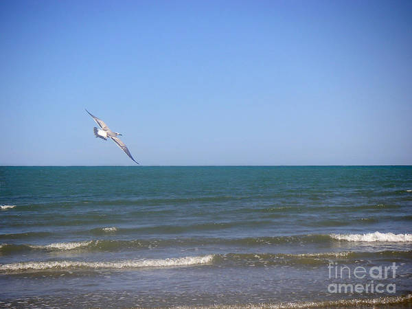 Nature Poster featuring the photograph Being One With The Gulf - Soaring by Lucyna A M Green