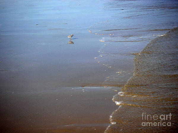 Nature Poster featuring the photograph Being One With The Gulf - Still by Lucyna A M Green