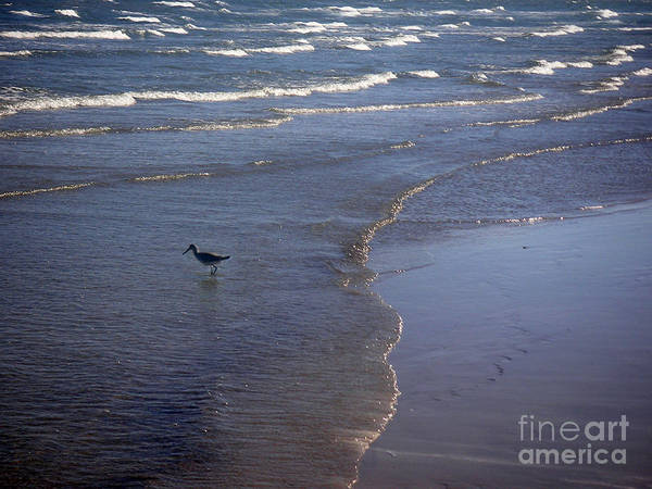 Nature Poster featuring the photograph Being One With The Gulf - Vigilant by Lucyna A M Green
