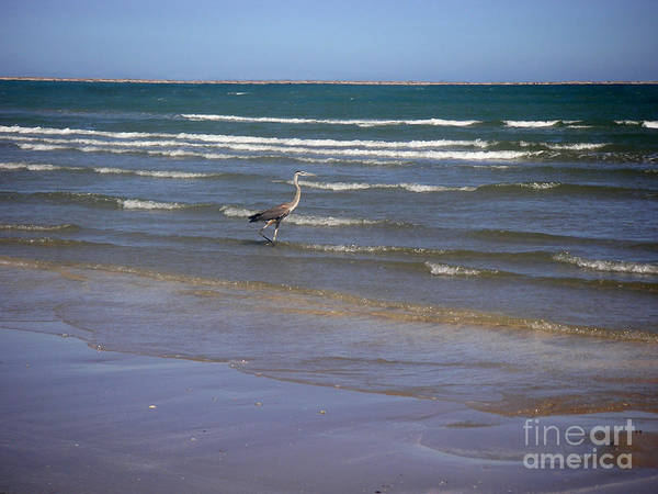 Nature Poster featuring the photograph Being One With The Gulf - Wading by Lucyna A M Green