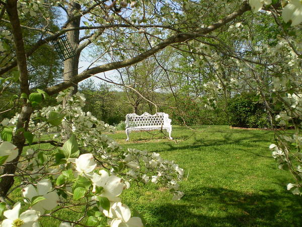 Bench Poster featuring the photograph Bench In Spring by Cat Rondeau