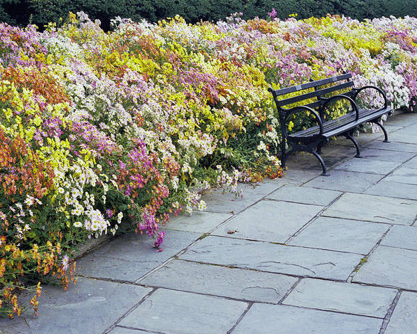 Fall Flowers? Poster featuring the photograph Bench by Wes Shinn