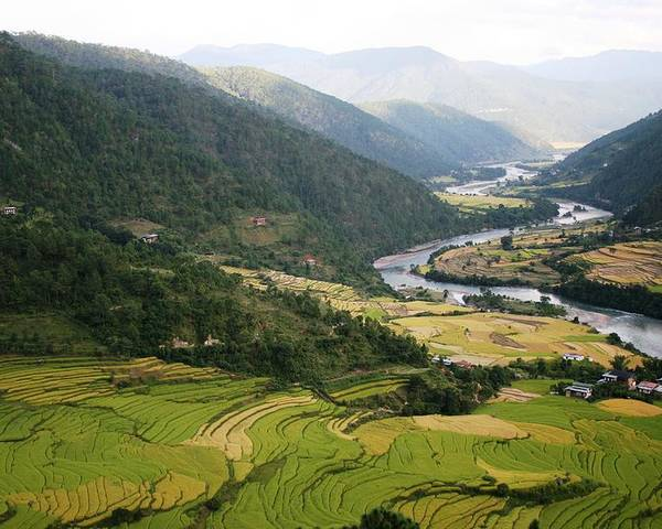 Scenery River Winding \rice Fields\ Lush Green View Bhutan \namgyal Choling\ Poster featuring the photograph Bhutan Rice Fields by Linda Russell
