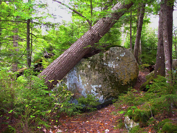 Trees Poster featuring the photograph Big Rock by Denise Keegan Frawley