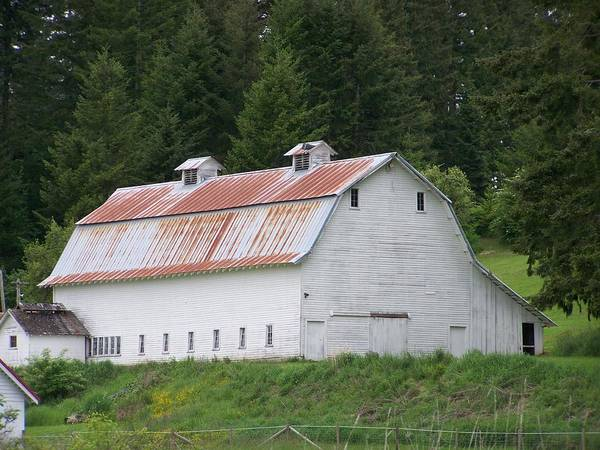 White Poster featuring the photograph Big White Old Barn With Rusty Roof Washington State by Laurie Kidd