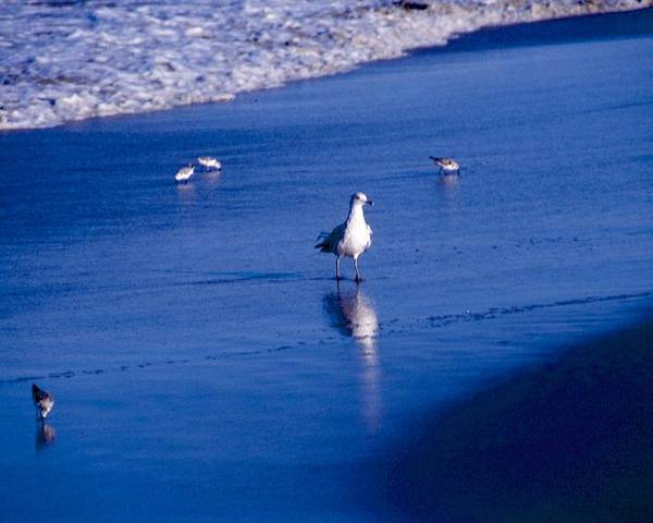 Ocean Poster featuring the photograph Bird At Ocean's Tide by George Ferrell