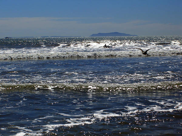 Beach Poster featuring the photograph Bird On A Wave by Robin Hernandez