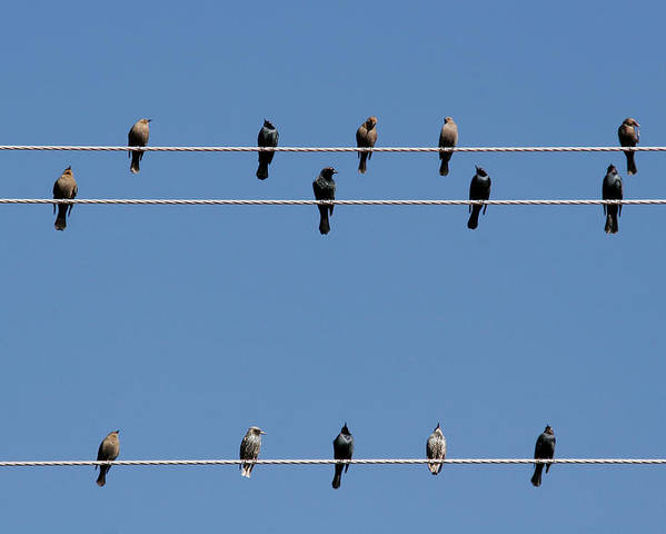 Birds Poster featuring the photograph Bird On A Wire by Christine Till