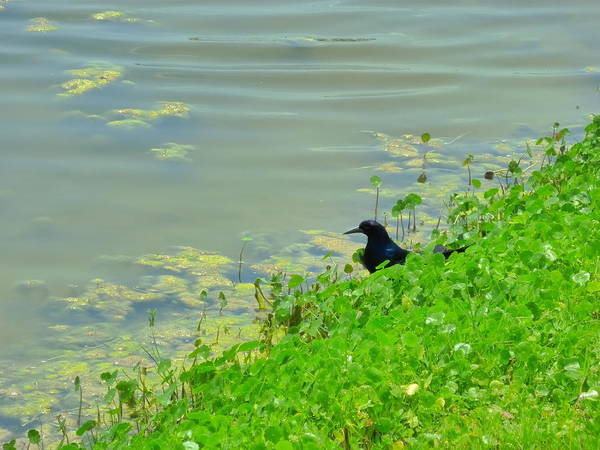 Nature Poster featuring the photograph Bird Watching by Florene Welebny