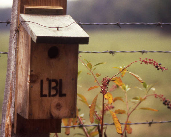 Land-between-the-lakes Poster featuring the photograph Birdhouse - 1 by Randy Muir