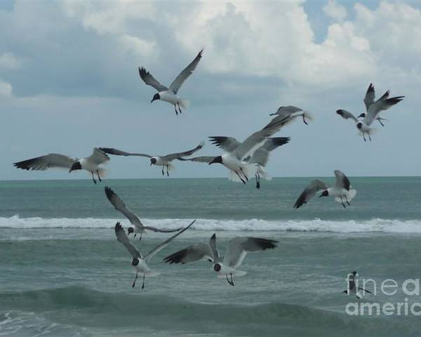Birds Poster featuring the photograph Birds In Flight by Barb Montanye Meseroll