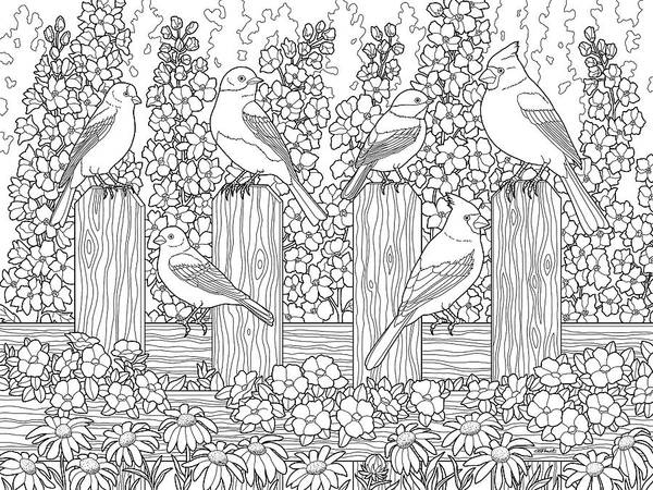 Birds In Flower Garden Coloring Page Poster By Crista Forest
