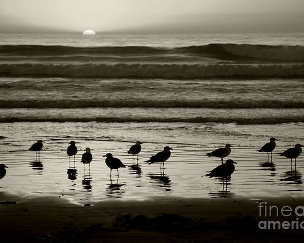 Beach Poster featuring the photograph Birds On A Beach by Timothy Johnson