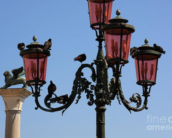 Venice Poster featuring the photograph Birds On A Lamp Post In Venice by Michael Henderson