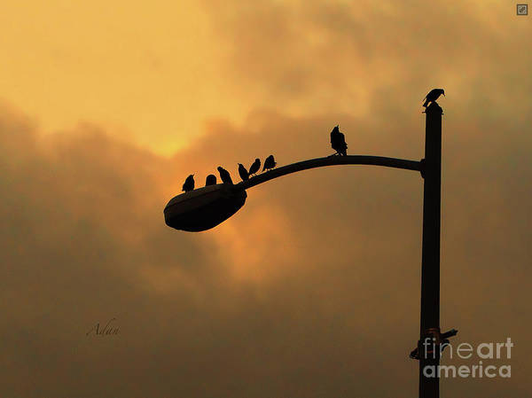 Birds Poster featuring the photograph Birds On A Post Amber Light Detail by Felipe Adan Lerma