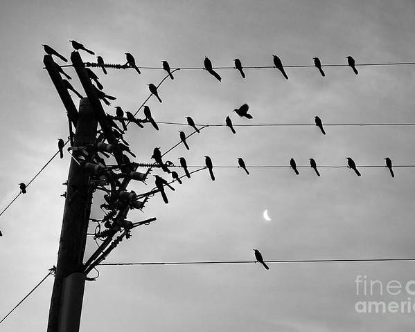 Poster featuring the photograph Birds On A Wire by Lionel Martinez