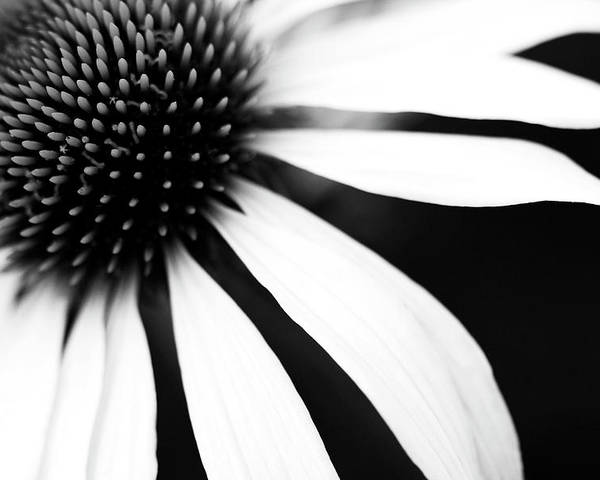 Horizontal Poster featuring the photograph Black And White Flower Maco by Copyright Johan Klovsjö