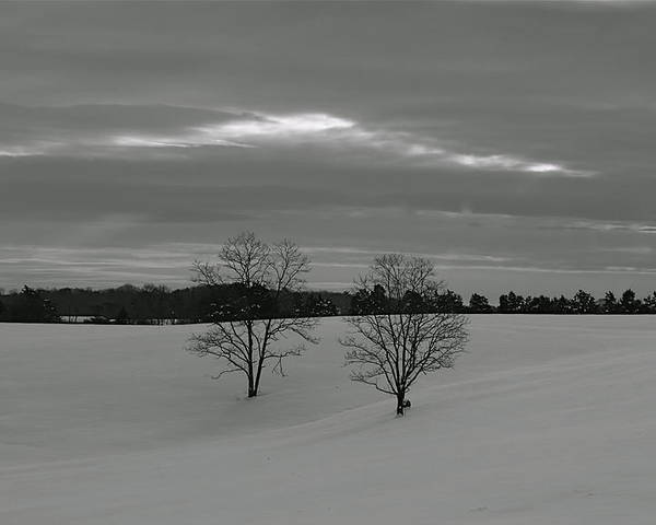 Trees Poster featuring the photograph Black And White by Glenn Vidal