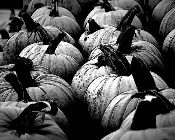 Pumpkins Poster featuring the photograph Black And White Pumpkins by Bill Ardern