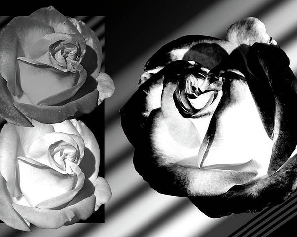 Roses Poster featuring the photograph Black And White Roses by Phyllis Denton