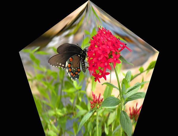 Butterfly Poster featuring the digital art Black Butterfly In A Diamond by Rosalie Scanlon