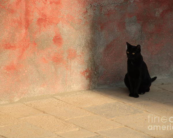 Cats Poster featuring the photograph Black Cat On Burano by Michael Henderson