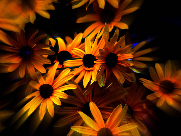 Flowers Poster featuring the photograph Black Eyed Susans by Martin Morehead