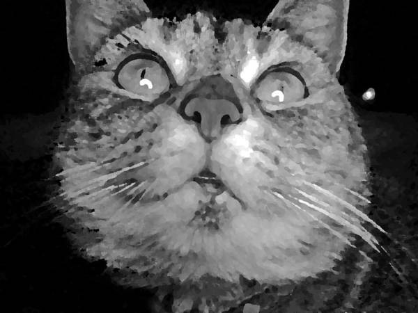 Monkey. Portrait; Poster featuring the photograph blackandwhiteKat by Delton Maddox