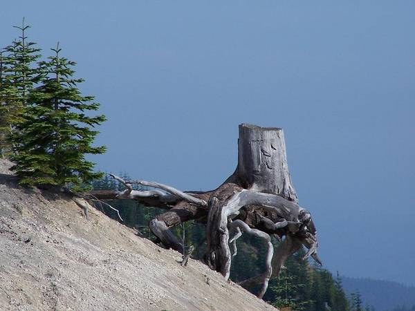 Landscape Poster featuring the photograph Blasted Stump by Gene Ritchhart