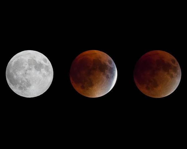 Full Moon Poster featuring the photograph Blood Moon Eclipse by Sandy Roe