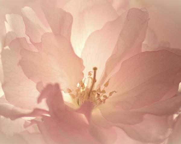 Poster featuring the photograph Blossoming by The Art Of Marilyn Ridoutt-Greene