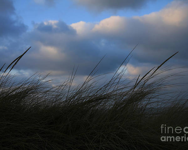 Dunes Poster featuring the photograph Blowing In The Wind by Timothy Johnson