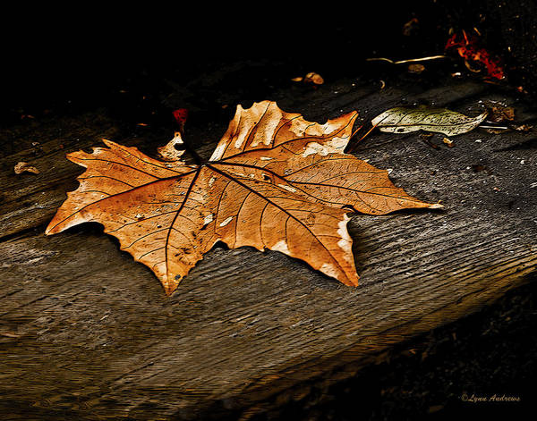 Leaf Poster featuring the photograph Blown Away by Lynn Andrews