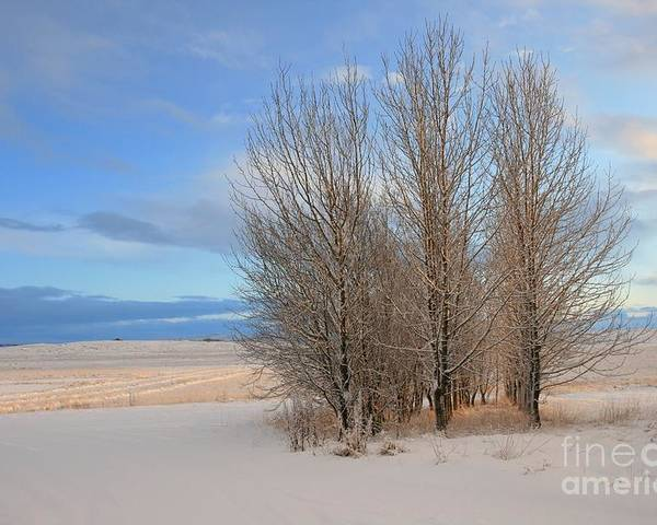 Winter Poster featuring the photograph Blue Aspen by Agusta Gudrun Olafsdottir