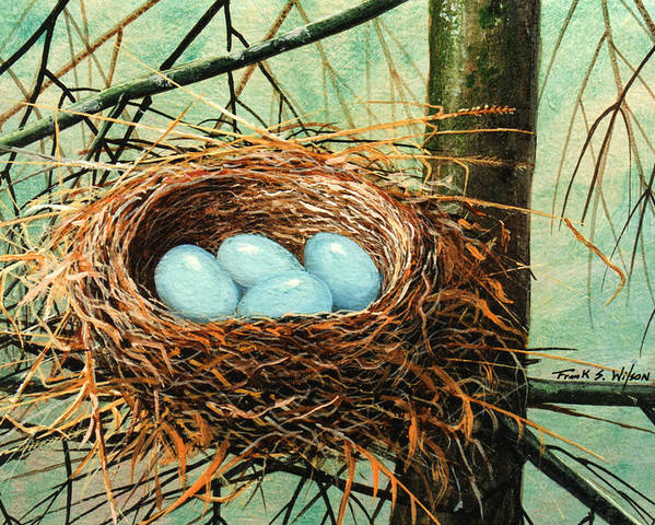 Wildlife Poster featuring the painting Blue Eggs In Nest by Frank Wilson
